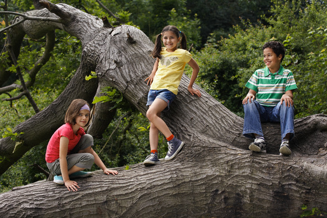 Three Children at Tree Trunk
