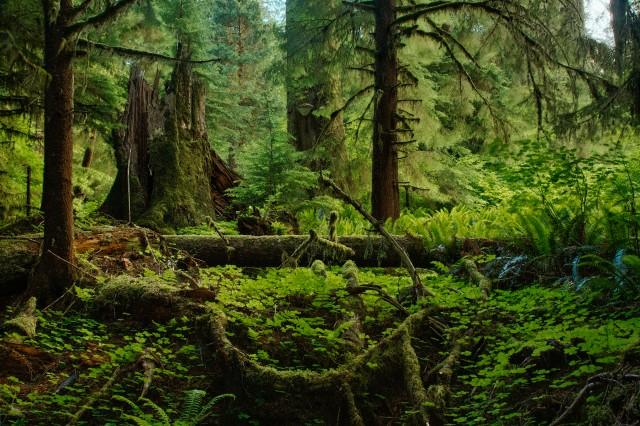 Rain Forest Washington State, USA