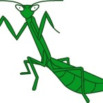 Clive Jones' pet, Mickey, the Mantid