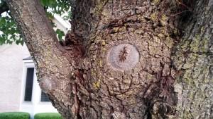 A tree knot