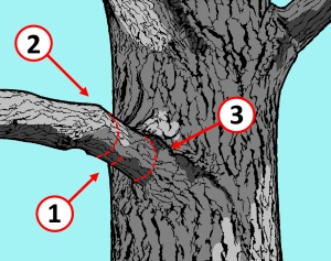 Ternary Pruning Method in 3 steps