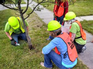 Indiana Tree Stewards