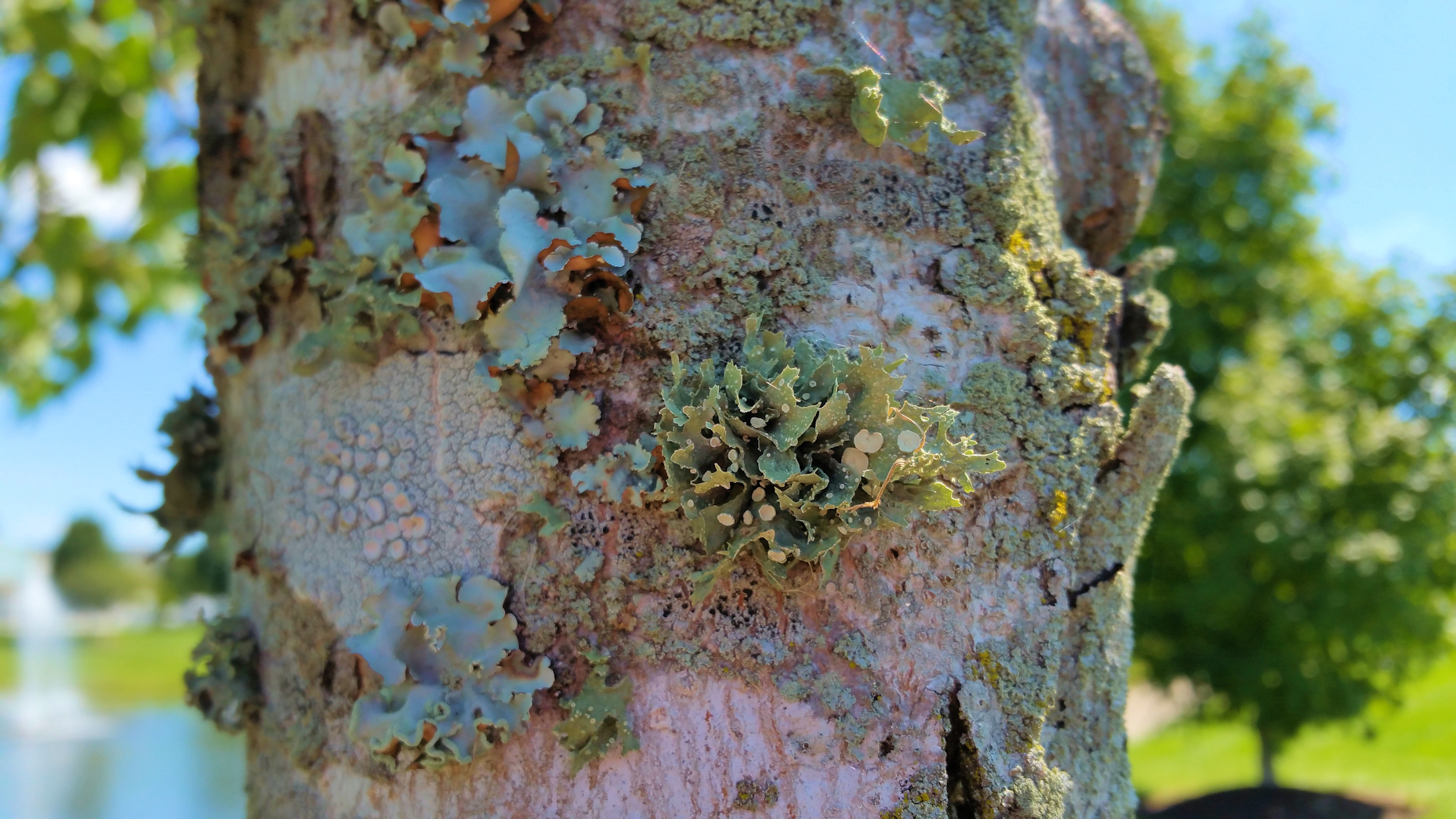 How to treat lichens of different kinds
