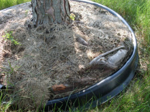 Roots encircle edging barrier