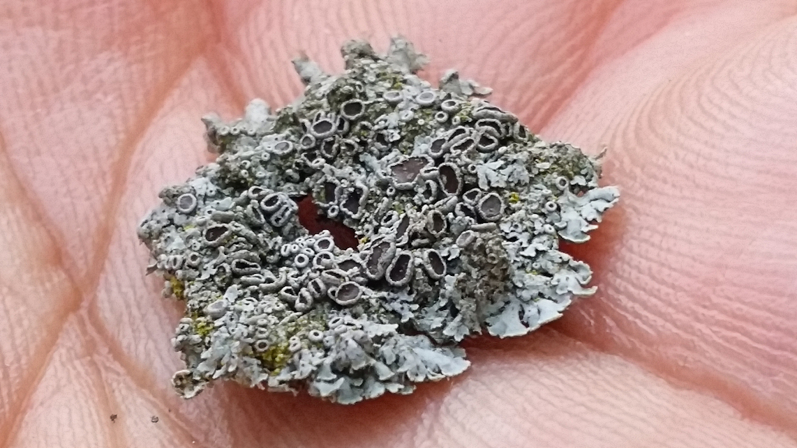 Are LICHENS Bad For Trees?