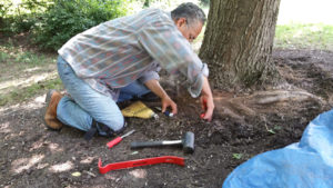 Jeff begins removing the surface girdling roots.