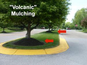 Volcanic mulching